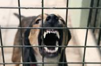 В Черкасской области домашняя собака, искусавшая хозяйского ребенка, оказалась больна бешенством