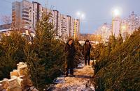«Покращення життя» идет полным ходом. У половины украинцев в доме не будет новогодней елки