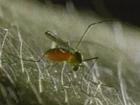 Ученые доперли, почему комары так любят впиться в плоть человека. Все дело в запахе