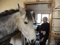Вот это по-нашему. Поссорившись с соседями, пенсионерка поселила у себя в гостинной лошадь. Фото
