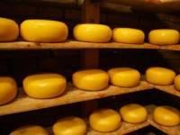 «Война сыров». Украина требует от Онищенко доказать ущербность молочного продукта