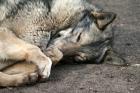 Власть Славутича закрывает единственный в городе приют для животных?