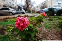 Природа начинает сходить с ума. Снег, цветы и прочие аномалии. Фото