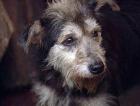 Киевских собак делают бешеными и травят?