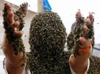 Иногда любовь людей к пчелам доходит до маразма. Фото