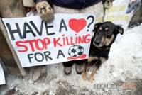 «Stop it!». Стая собак под стенами Кабмина «просит» Азарова закрыть передвижные крематории. Фото
