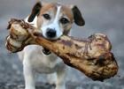 В столице стерилизовали более 9 тысяч бродячих собак. Приютить песика не желаете?