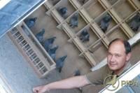 Голландец продал своего почтового голубя богачу из Китая за 330 тыс. долларов. Фото