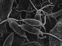 Биохимики в легком ступоре. Амазонские грибы охотно жрут пластик