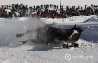 Поляки устроили снежные гонки на чудо-санях. А лошадок все-таки жалко. Фото