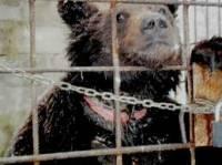 Медведя Потапа, владелец которого напал на журналистов телеканала «1+1», отправят на реабилитацию