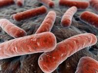 Хана микробу. Ученые раскрыли важный секрет туберкулеза