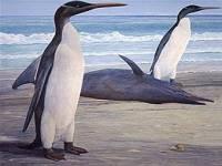 Нет ничего невозможного. В Новой Зеландии нашли самого большого ископаемого пингвина
