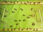 Дрессированные муравьи + Хороший фотоаппарат = Уникальные снимки