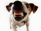 Попытка №2. Знаменитая французская актриса еще раз написала Януковичу о собачках