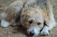 Столичный приют для собак закроют по просьбе соседей. Уличные стаи могут пополниться сотней блохастых