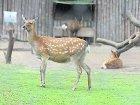 В Киевском зоолагере скончалась очередная животинка