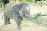 В киевский зоопарк везут очередную экзотическую жертву