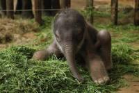 А если бы этот малыш родился в Киевском зоопарке, у него был бы шанс выжить?