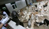 Женщина завела себе 1500 собак и 200 кошек. Бывает и такое