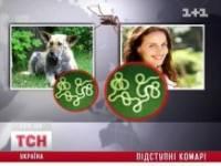 После укусов комаров у 14 украинцев обнаружили подкожных червей