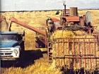 В Украине закончена уборка ранних зерновых. К сожалению, такого урожая, как в прошлом году, нам не видать…
