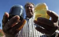 Во Франции пчелы, наевшись конфет, начали делать разноцветный мед