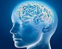 Кто бы мог подумать. Морской слизень помог разгадать тайну человеческого мозга