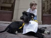 Европа научит украинских зоозащитников, как себя вести