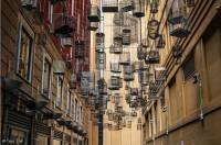 От этих птиц остались только голоса... Австралийский художник показал, к чему приводит урбанизация
