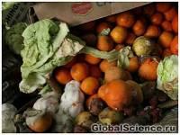 Особенности сбора урожая в Украине: в этом году сгниет каждый третий овощ