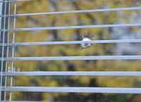 Неизвестные стреляли в окно квартиры главы «Славянской партии». Он полагает, что это дело рук «Свободы»