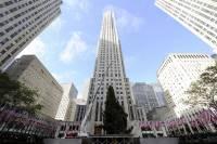 В Нью-Йорке уже установили главную рождественскую елку. В отличие от того, что было у нас, она действительно похожа на елку