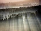 Туман, туман, седая пелена - вот и все, что нужно для отличных фотопейзажей