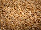 Украинские зернотрейдеры в любой момент готовы прекратить экспорт пшеницы