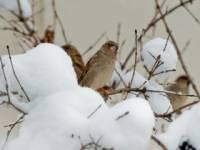 Синоптики обещают, что уже через неделю по всей Украине выпадет снег