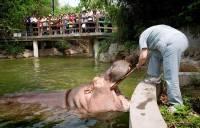 В Шанхае посетителям зоопарка показали, как правильно чистить зубы бегемоту