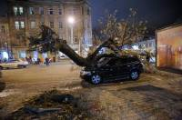 В Одессе ветер повалил дерево прямо на машину