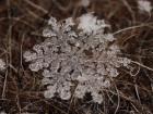 При ближайшем рассмотрении снежинки не только уникальны, но и фантастически красивы