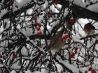 Несмотря на прогнозы гидрометцентра, Киев завалило снегом. Красота стоит неописуемая