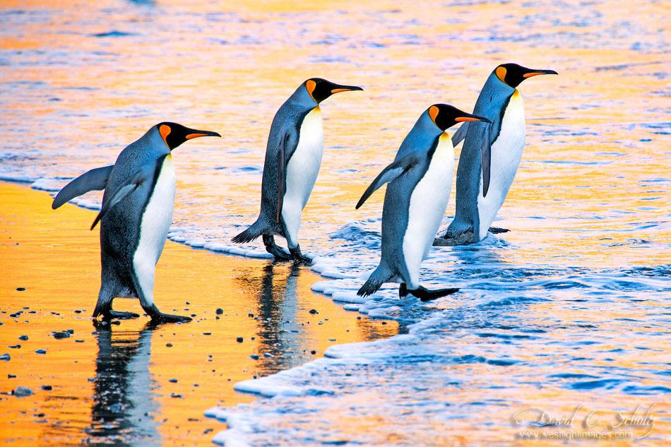 http://s.fraza.ua/images/2012/12/06/arktika-antarktika-4.jpg