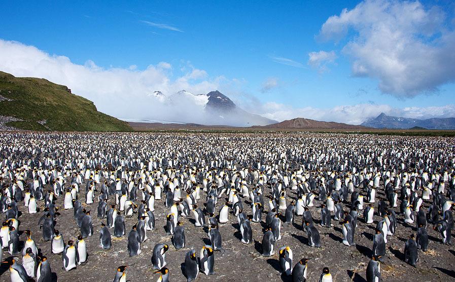 http://s.fraza.ua/images/2012/12/06/arktika-antarktika-7.jpg