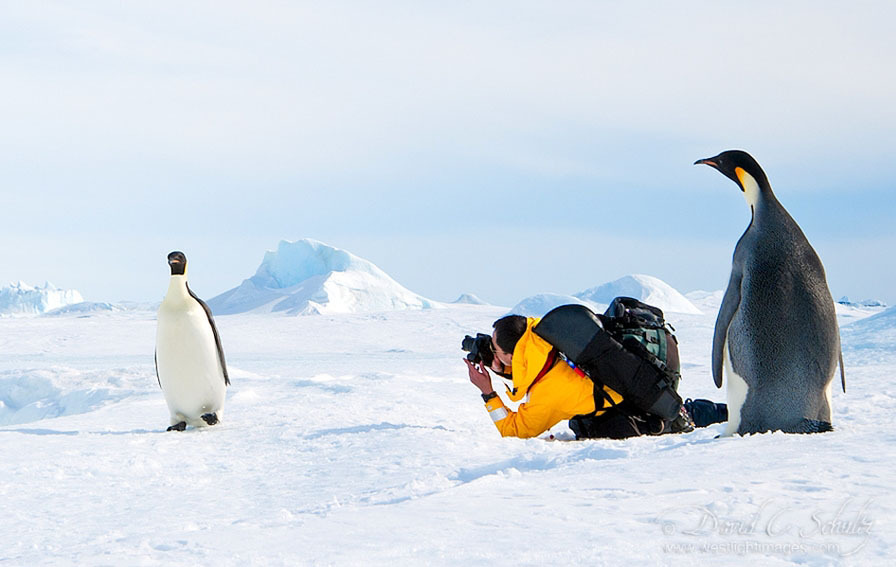 http://s.fraza.ua/images/2012/12/06/arktika-antarktika-9.jpg