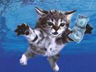 Если бы кошки были звездами рока, они бы выпускали такие  альбомы
