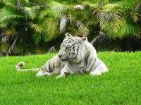 Лучшие зоопарки мира. В Киеве вы такого не увидите