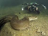 Отважный швейцарец умудрился заснять в воде самую большую змею в мире