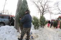 Продавцы елок умудряются зарабатывать на лесных красавицах довольно приличные суммы