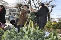 Всего за неделю в Киеве изъяли более 3 тысяч нелегальных елок