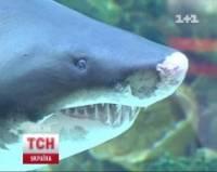 Как оказалось, «замученная» в киевском торговом центре акула живет так шикарно, что нам и не снилось