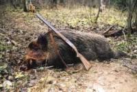 Регионалы предлагают разрешить охоту в… заповедниках